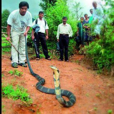 Snake Kerala